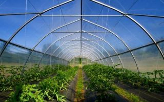 Как получить грант для сельского хозяйства?